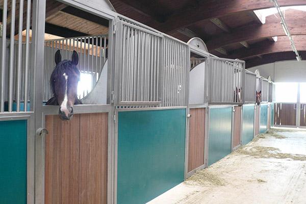 Realizzazione nuovo maneggio cavalli